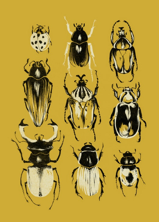 The Clothes Horse: Beetle Collections