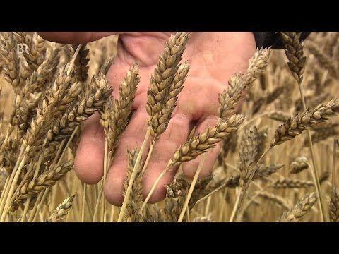 Getreide - seit Jahrtausenden unser täglich Brot - Agrarbetrieb