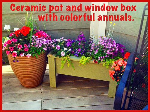 Patio Pots - - Lafayette Florist & Greenhouses in Lafayette, Colo. by Flower Factor, via Flickr