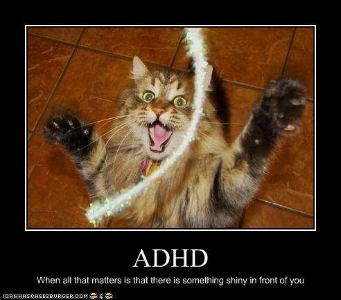 TOTALLY!: Adhd, Laughing, Jokes, Funny Cat, Life Lessons, Funny Stuff, Humor, Bliss, Animal