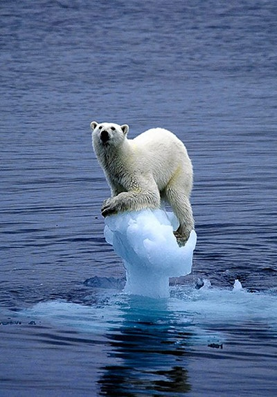 A polar bear is photoed by Carla Lombardo Ehrlich teetering on a tiny spot of melting ice. The image is taken from the WWF's online storybook Earth Book, which asks people across the globe to submit their favourite photos of the natural world and describe what they love most about the planetPhotograph: Carla Lombardo Ehrlich/WWFEarth Book,  Polar Bears, Animal Kingdom, Baby Animal,  Thalarcto Maritimus, Global Warm,  Ursus Maritimus, Ice Bears, Climate Change