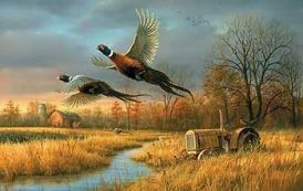 """ Back Forty "" - Pheasants  - Print by Jim Hautman"