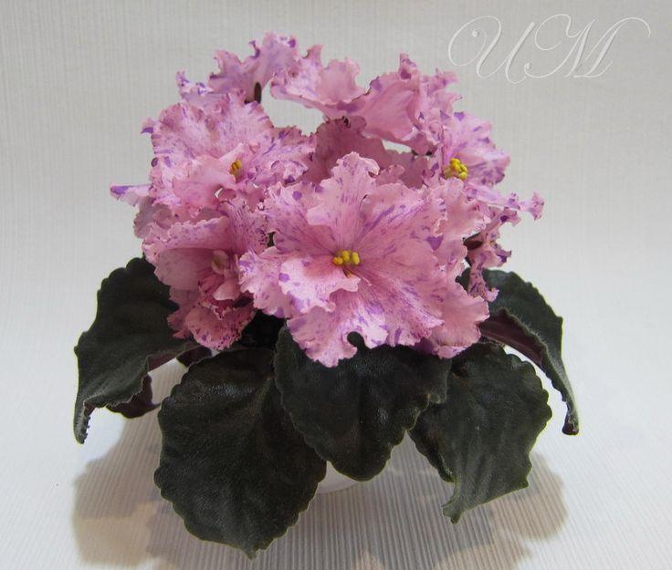 Сеянец БО-Розовая Сова(стандарт,сеянец)