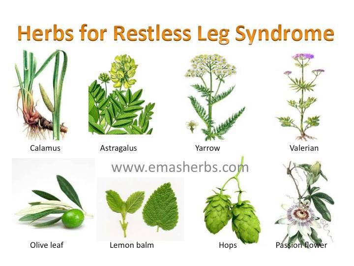 Restless leg syndrome is not just irritating it can be down right painful check out these herbs for restless leg syndrome for relief
