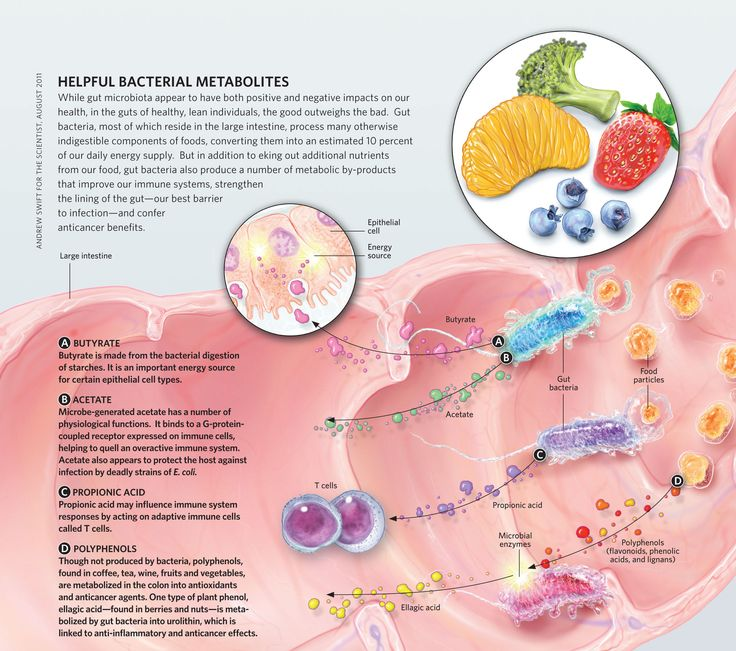 123 Best MICROBIOME Images On Pinterest