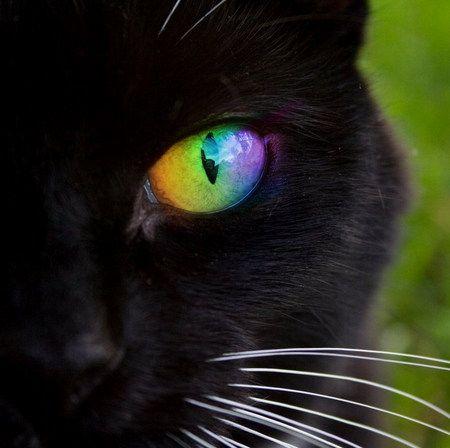 kitty rainbow eyes