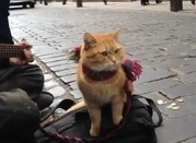 Bob, da gatto di strada a eroe di un libro