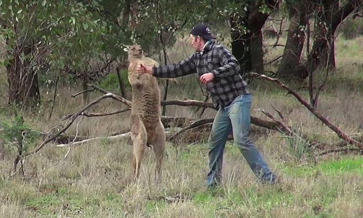 Taronga zoo says it will not fire keeper filmed punching kangaroo