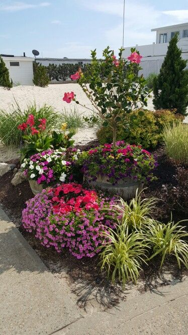 Pin by Dees Nursery Florist on Beach Garden Ideas