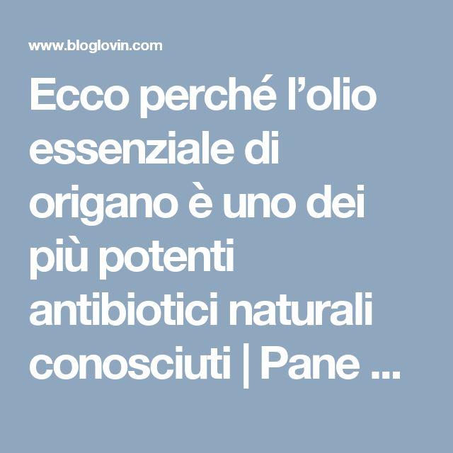 Ecco perché l'olio essenziale di origano è uno dei più potenti antibiotici naturali conosciuti   Pane e Circo   Bloglovin'