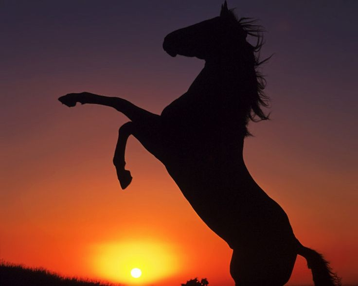 25 beste idee n over paarden op pinterest paard zwarte paarden en appaloosa paarden - Kamer paard meisje ...
