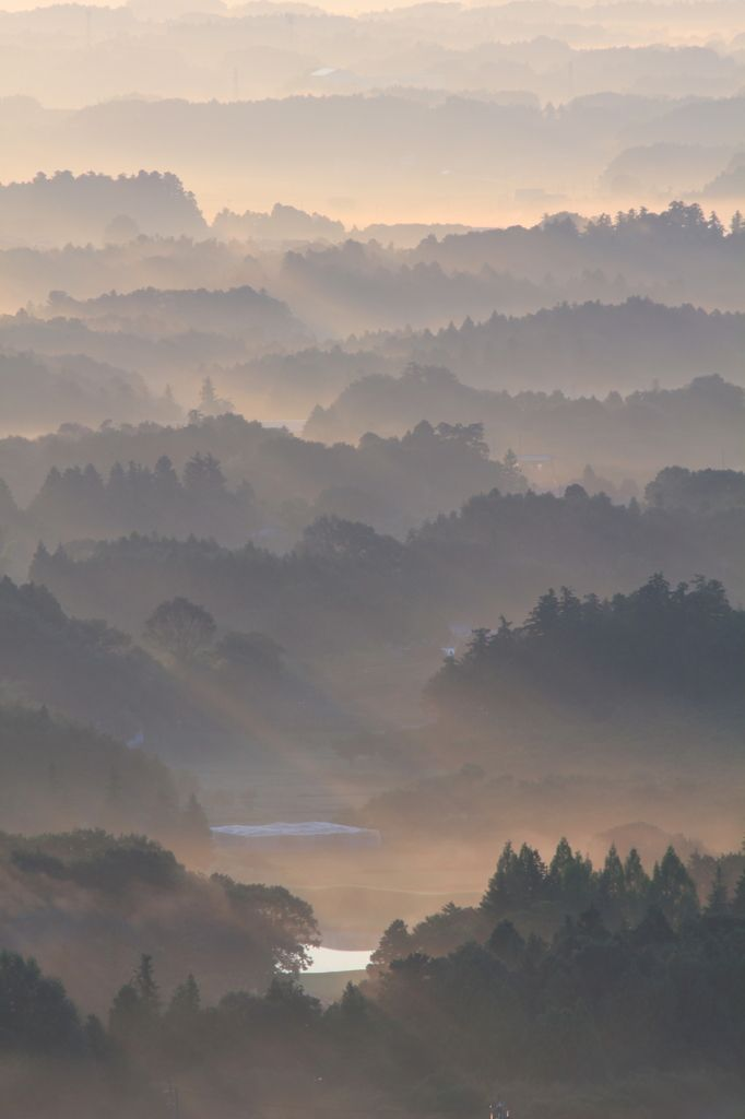 """beauty-rendezvous: """"Early morning fog by Or ~ Bow """""""