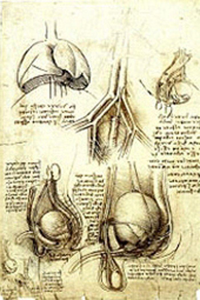 Famoso Leonardo Da Vinci Dibujos Anatomía Ilustración - Anatomía de ...