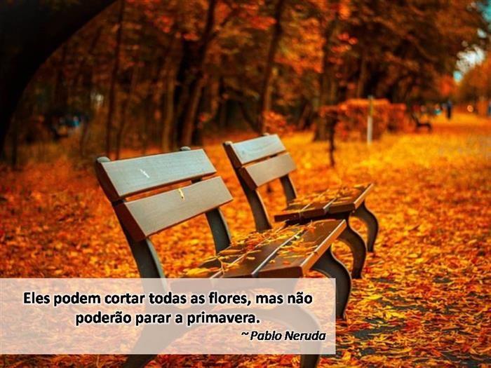 Frases e folhas de outono que vão te inspirar... | * f r a ...