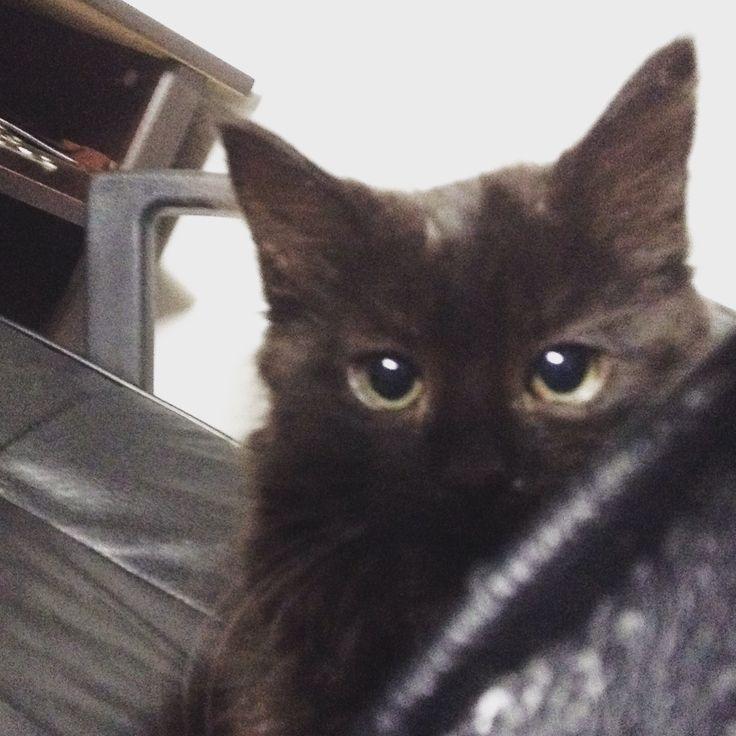 MY FURBABY/My kitten