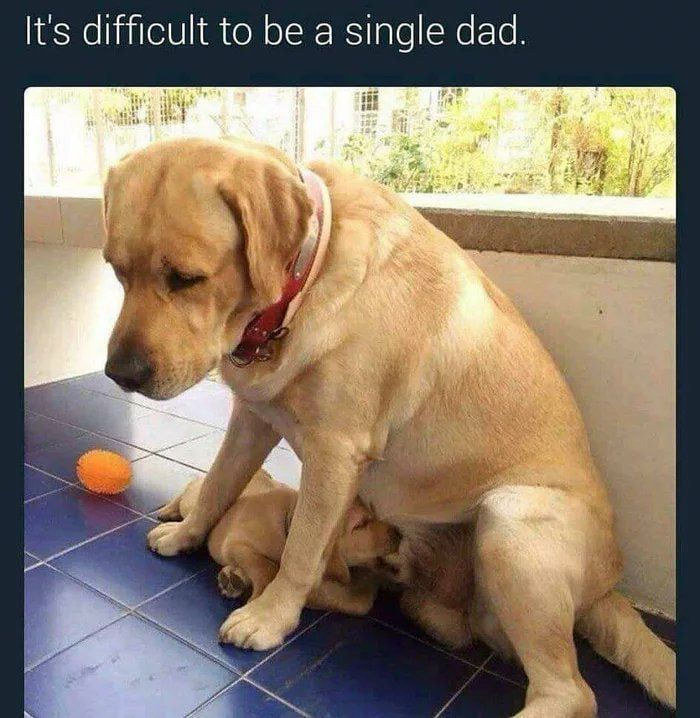 Dog Surprised With New Puppy Single Dads Funny Pictures Funny Memes