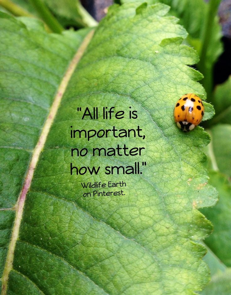 """""""All life is important, no matter how small."""" - Wildlife Earth"""