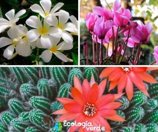 25 Tipos De Flores Clases Nombres Y Fotos Tipos De Flores Flores Nombres Y Fotos Flores
