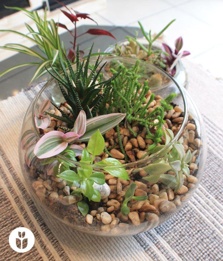 17 melhores imagens sobre arranjos de flores no pinterest - Composiciones de cactus ...