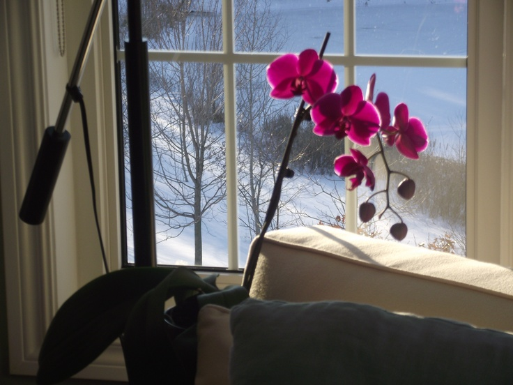 No.9 2013 winter bloom #orchids #home