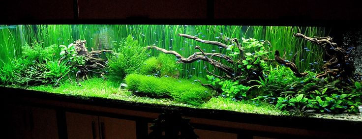 Aquascaping | 1680 liters | AquaScaping World Forum