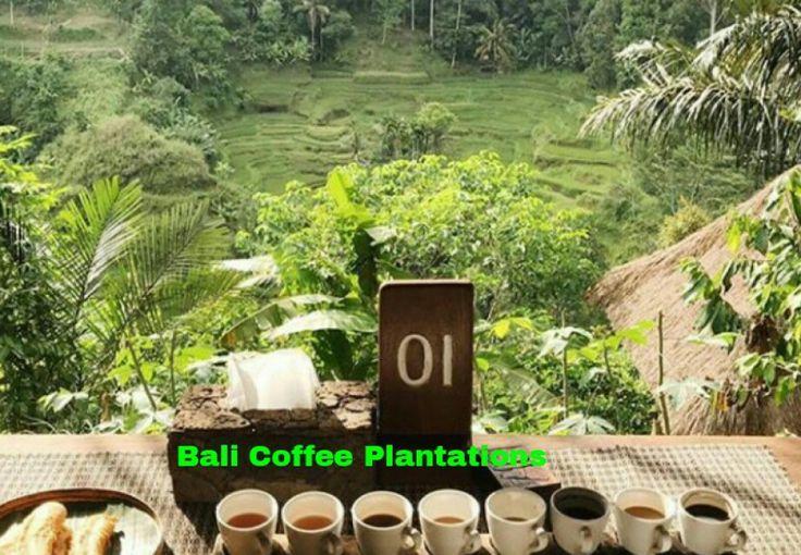 The combination of Mount Batur Sunrise Trekking and Tour in Ubud Bali.