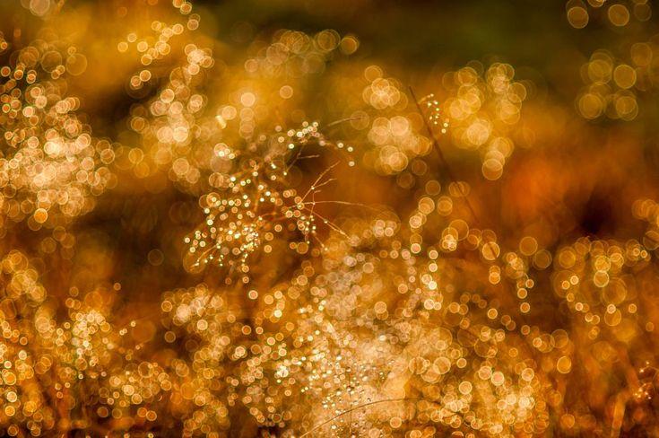Droplets - Pisaroita by Pauliina Kuikka