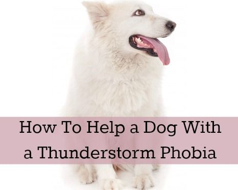 how to help dogs who are afraid of thunder
