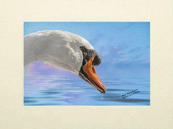 """New wildlife art print """"Mute Swan Portrait"""" by Iain S Byrne http://etsy.me/1vVePWz via @Etsy"""