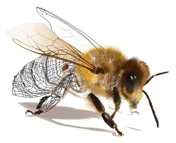 Honey Bee - done in Illustrator mostly using gradient mesh tool