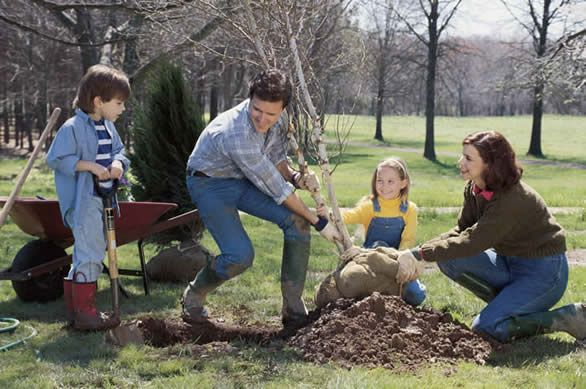 Planting Trees and Shrubs in Clay or Sandy Soil