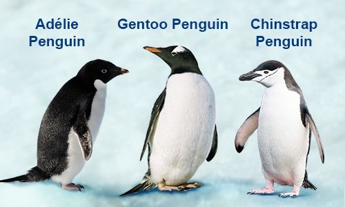 penguins species