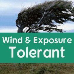 Wind & Exposure