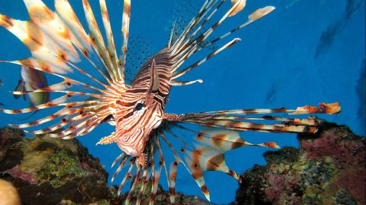 17 Beautiful but Dangerous Fish - weather.com
