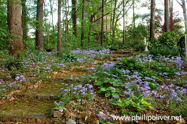 Beautiful woodland garden garden ideas tips for Woodland garden designs