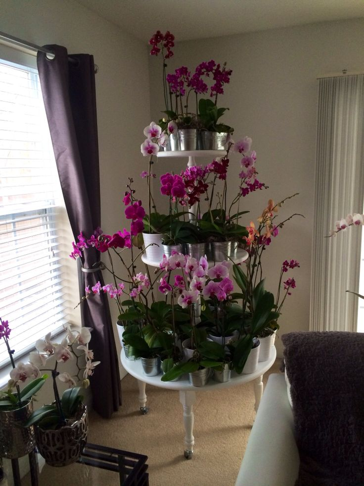 Orchid Plant Stand What A Wonderful Idea Orchids