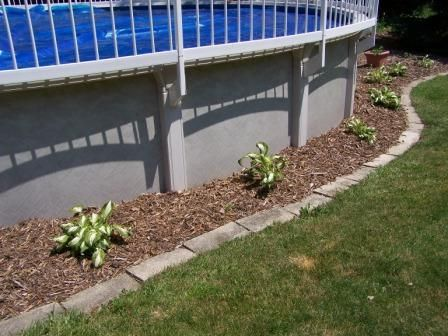 hostas are ideal around an aboveground pool they thrive in the sunshade mix above ground pool landscapingswimming pool