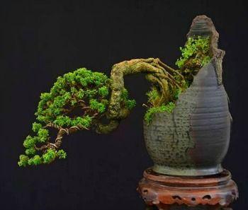 bonsai pots, custom bonsai pots