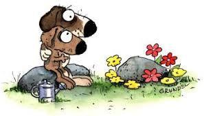 Bildergebnis für ein hund ist gestorbe
