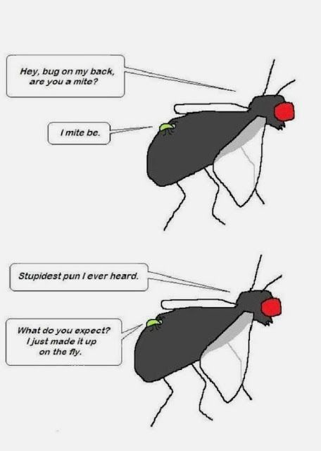 Funny Fly Mite Pun Cartoon Joke Picture