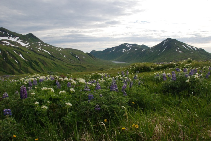 Attu Island, Aleutians, Alaska.  It's like this every Spring.  Probably my favorite assignment while in USCG.