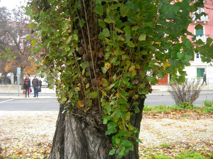A natureza fura a casca da árvore para brotar