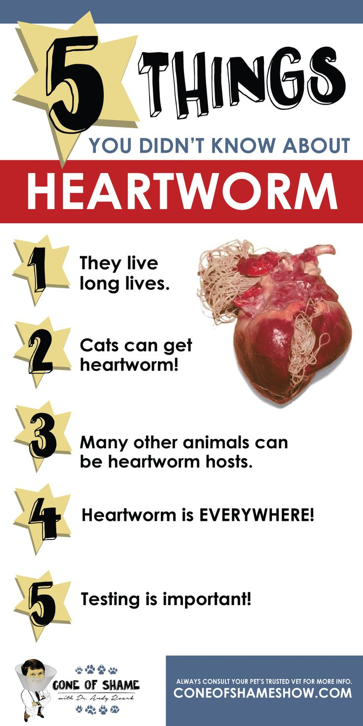Heartworm facts - Click for more info on keeping dogs, cats & other pets safe from heartworms!
