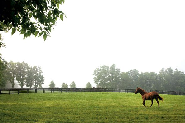 169 Best Images About Kentucky Heritage On Pinterest Horse Farms The Old And Camps