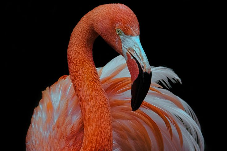 Animal Portraits – Dah…ling… – Wallpaper by KWPashuk (Thanks for >3M views) #travel #holiday #booking #wanderlust #earth #destinations #traveldestinations Central