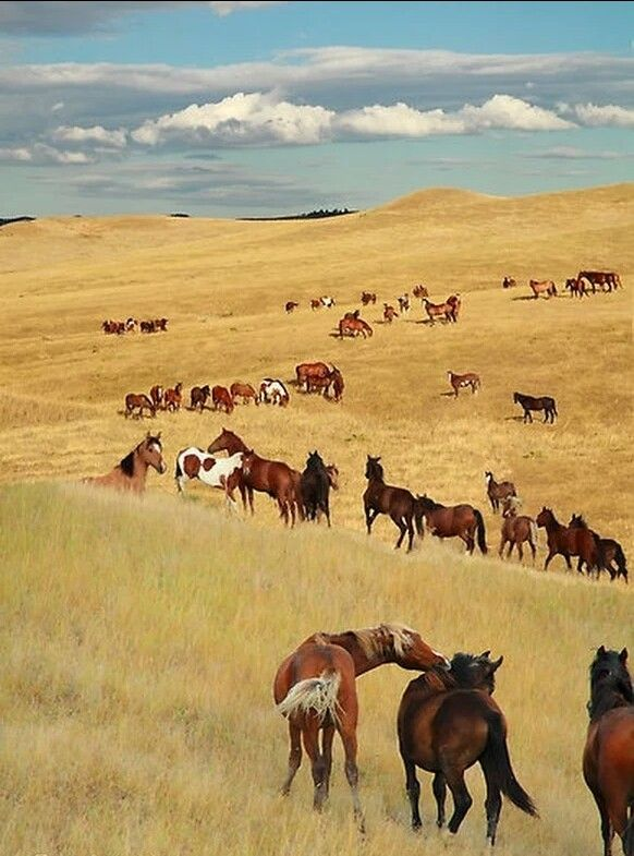 Why is it that horses and wide, wild places under the open sky seem so at home with each other?