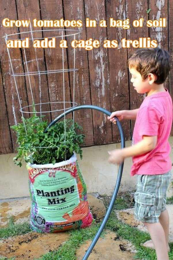 Grow Tomatoes In A Bag Of Soil And Add Cage As Trellis Gardening Gardeningtips Gardenplanters