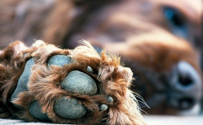 Don't Ignore A Pet's Broken Toenail | Care2 Healthy Living