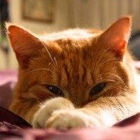 #dogalize Gatti arancioni tutte le caratteristiche e le qualità #dogs #cats #pets