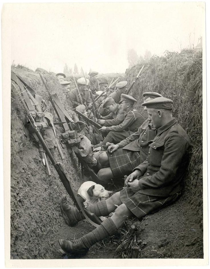 WW1: Scottish soldiers in a trench. Note the dog keeping company. The group includes both kilted and regular pants riflemen.